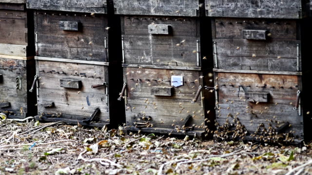 Honey Bees Old honey bee hives,,. zooming in and from side.,,,,,, arthropod stock videos & royalty-free footage
