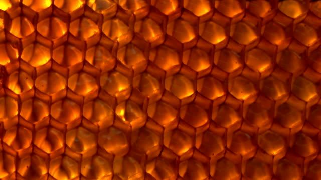 a nido d'ape - favo video stock e b–roll