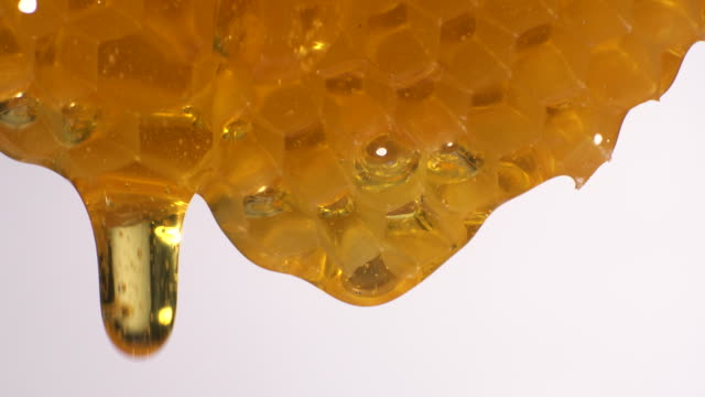 (real time) honey flowing from honeycomb - favo video stock e b–roll