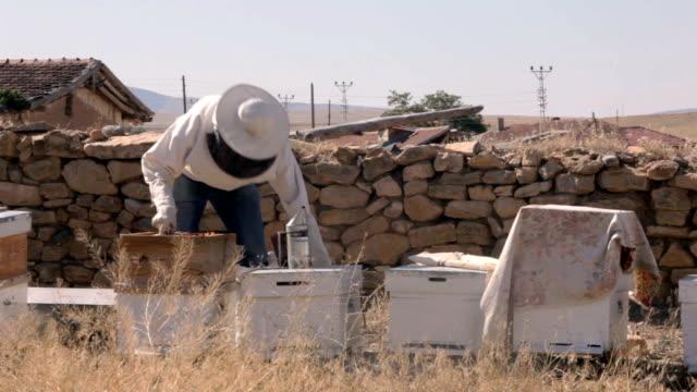 Honey production video