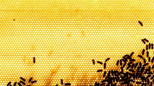 Honeycomb. Bees on the Frame in the Hive in the Apiary video