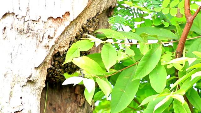 hollow albero a nido d'ape - torace animale video stock e b–roll