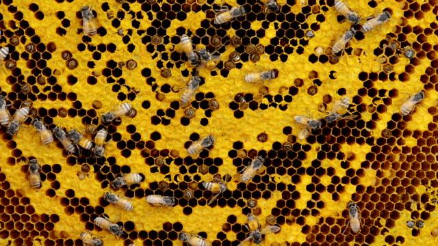 Bienenwabe – Video