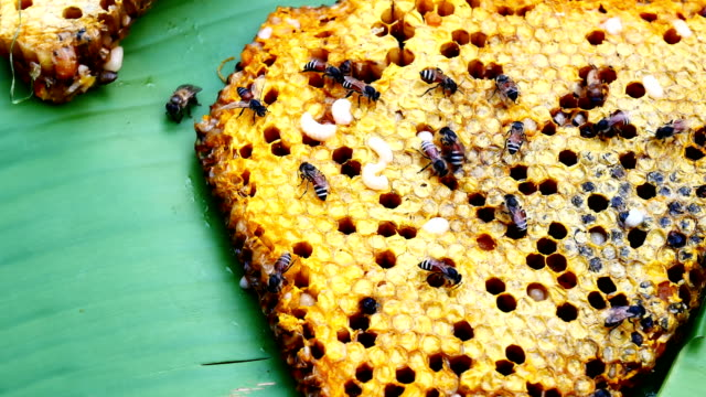 honeycomb - ape operaia video stock e b–roll