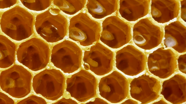 vídeos de stock e filmes b-roll de honeycomb.transparent drop of honey dripping off the honeycomb.close up - honeycomb