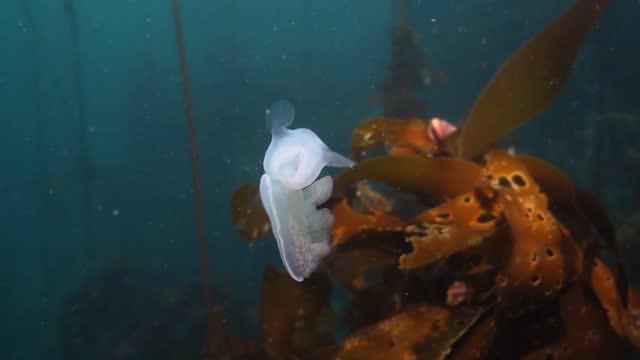 海を泳ぐフード付きヌーディブランチ - 海洋生物点の映像素材/bロール
