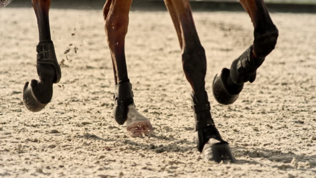 slo mo ds hooves of a brown horse striking the ground - arto inferiore animale video stock e b–roll