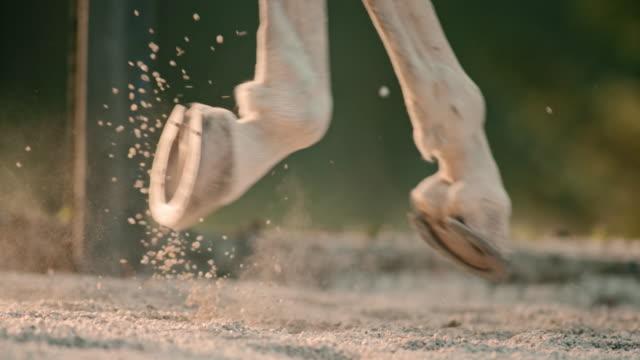 slo mo zoccoli dei cavalli galloping - cavallo equino video stock e b–roll