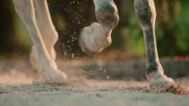 SLO MO Hooves の馬に飛び回るサンド ビデオ