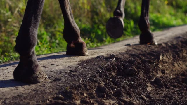 hooves of a horse walking on the ground