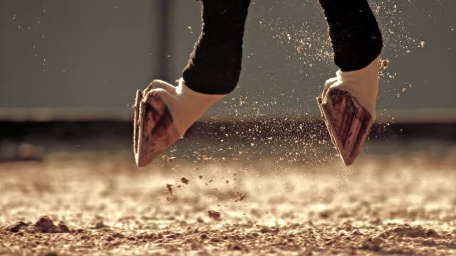 slo mo ts hovar av galopperande vit häst slående marken - racehorse track bildbanksvideor och videomaterial från bakom kulisserna