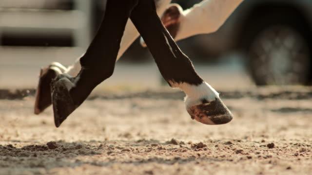 slo mo ts hovar av två hästar som springer i solsken - racehorse track bildbanksvideor och videomaterial från bakom kulisserna