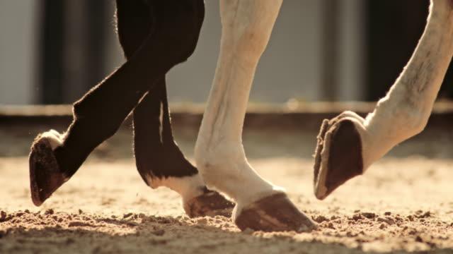 slo mo ts hovar av två hästar som går i arena - racehorse track bildbanksvideor och videomaterial från bakom kulisserna