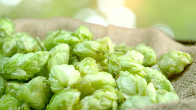 Hop cones in the linen bag in 4k slow motion 60fps Professional video of hop cones in the linen bag in 4k slow motion 60fps lager stock videos & royalty-free footage