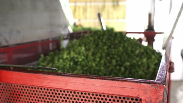 hops falling into large metal crate - биотопливо стоковые видео и кадры b-roll