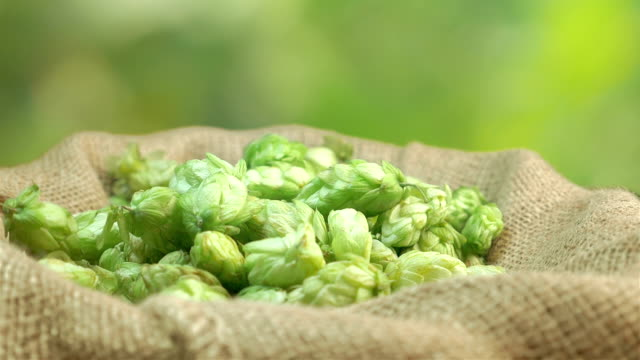 Hops falling into the linen bag in slow motion 180fps