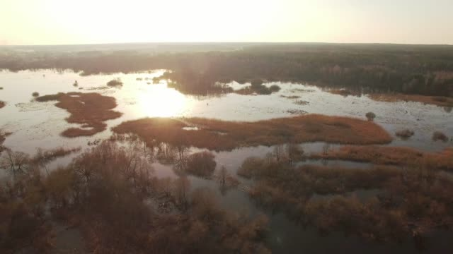 Horizontal tracking aerial shot of trees in water on sunset sunrise. Horizontal tracking aerial shot of trees in water on sunset sunrise. Flooded plain with trees bushes growing during high water spring season with sun shining yellow and orange above water reflection wetland stock videos & royalty-free footage