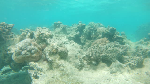underwater: horrible global warming bleaching the once colorful coral reefs. - morte video stock e b–roll