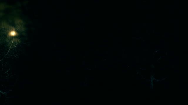Horror dark forest scrolling background