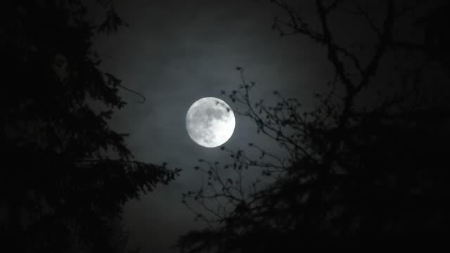 horrorfilm vollmond in der nacht zeitraffer - laub winter stock-videos und b-roll-filmmaterial