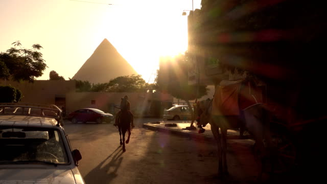 Horse and camel carriage in Giza, Cairo, Egypt Horse and camel carriage in Giza, Cairo, Egypt urban fashion stock videos & royalty-free footage