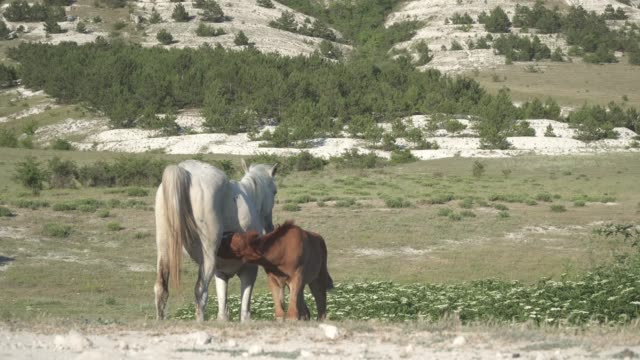horse and foal in the mountains video