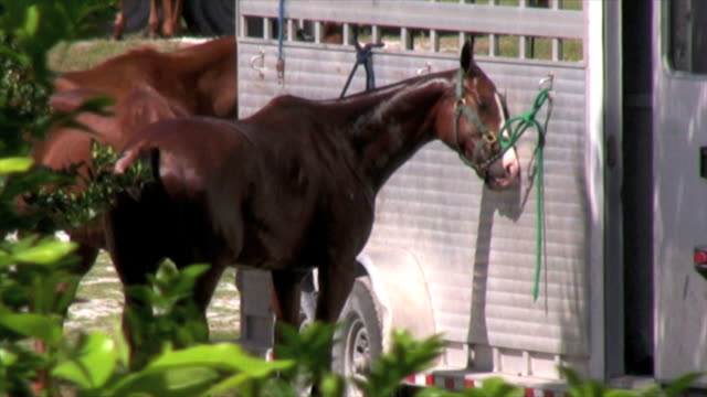 Horse and trailer video