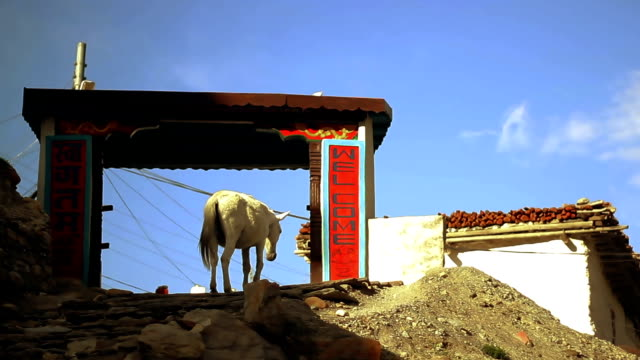 馬に到着ゲートのリモートヴィラージュネパールでのムスタング地区に入ります。 - ネパール人点の映像素材/bロール