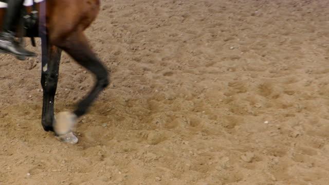 Horse Bay Legs Close Up - video