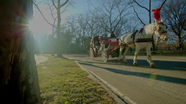 Horse carriage in Central Park New York City sunlight flare video