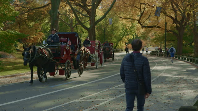 horse carriage in central park new york city - cocchio video stock e b–roll