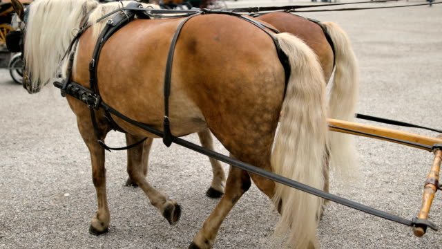 pferdekutsche in salzburg, österreich - salzburg stock-videos und b-roll-filmmaterial