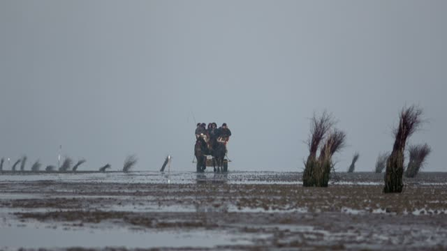 horse carriage ride over the wadden sea by low tide, cuxhaven - илистая пойма стоковые видео и кадры b-roll