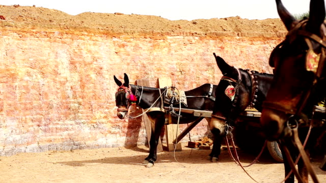 Horse cart standing in a row - video