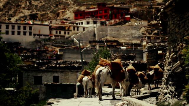 vídeos de stock, filmes e b-roll de cavalo comboio que chegam ao nepal de aldeia remota de marpha, nepal - mustang