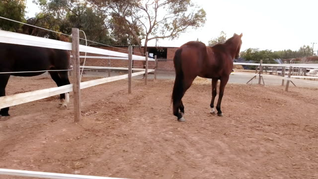 Horse corrals outdoors video