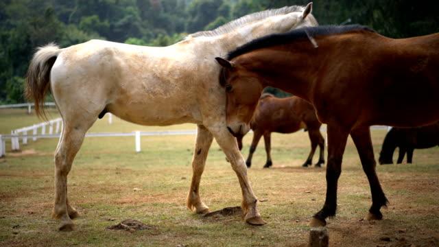 馬の愛とその他を粉砕します。 - 2匹点の映像素材/bロール