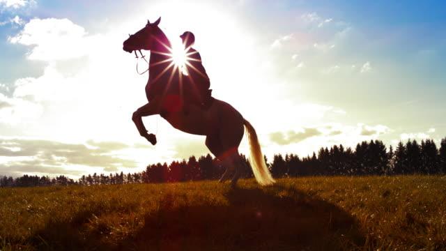 太陽の下で pesade をしているスローモーションの馬 - 動物に乗る点の映像素材/bロール