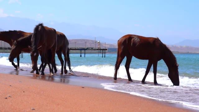 pferd-trinkwasser aus dem meer - hengst stock-videos und b-roll-filmmaterial