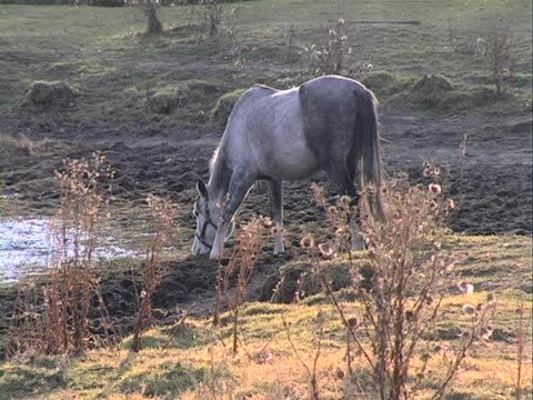 pferd trinkt wasser - pferdeartige stock-videos und b-roll-filmmaterial