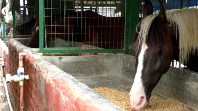 Horse eating fodder and other supplement