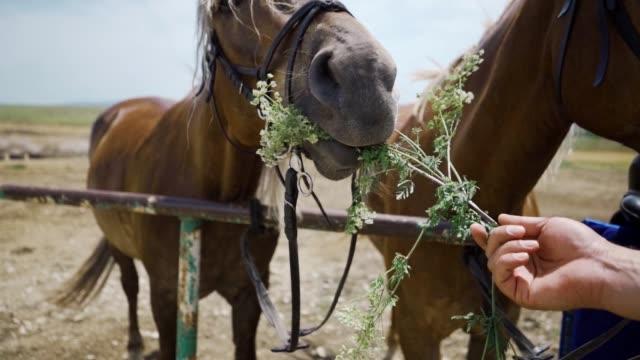pferd frisst gras und blumen auf einem feld in zeitlupe - hengst stock-videos und b-roll-filmmaterial