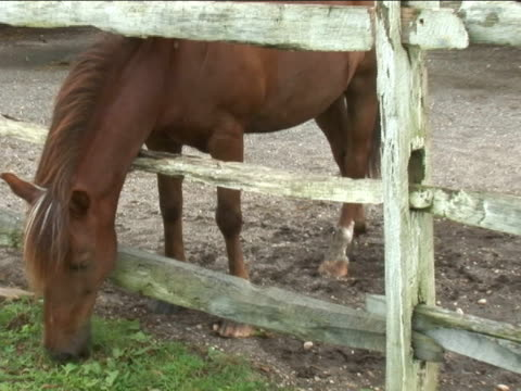 pferd essen gras auf bauernhof - pferdeartige stock-videos und b-roll-filmmaterial