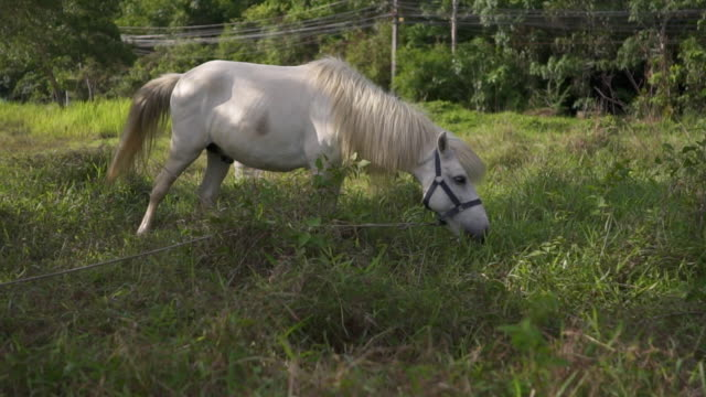 Horse eating grass video