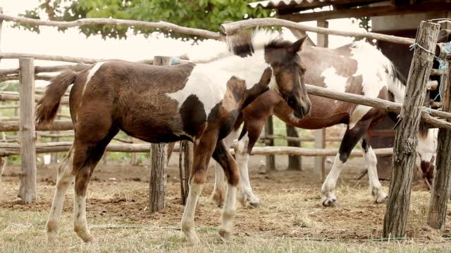 Horse Eating Hay video