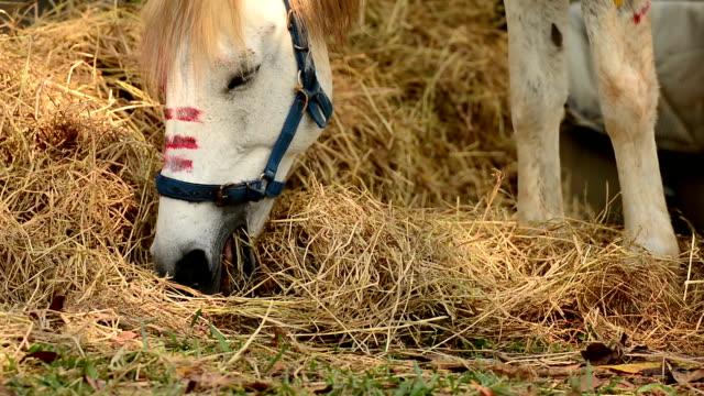 cavallo mangiare - cavalla video stock e b–roll