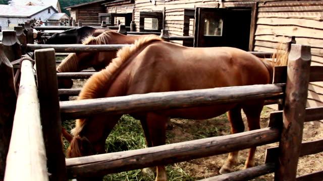 konia jedzenie siano w kabinie, zbliżenie - siodło filmów i materiałów b-roll