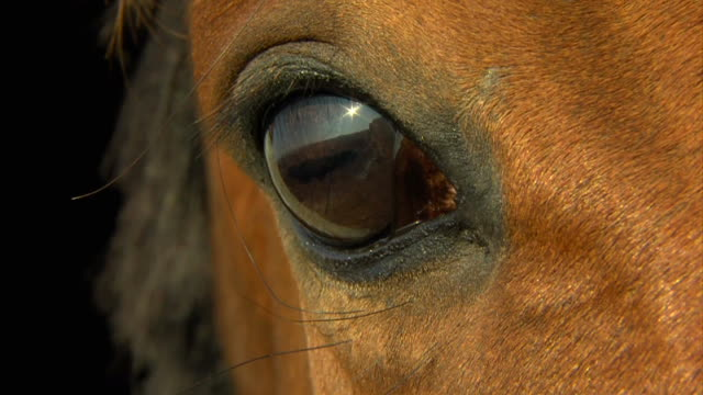 horse eye in macro close up video