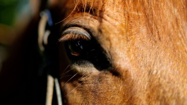 馬顔とクローズ アップの目。 - 動物に乗る点の映像素材/bロール
