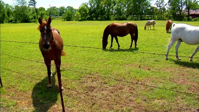 cavallo fattoria 2 - stallone video stock e b–roll